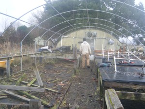 Clearing out the rotten tables in Starter Greenhouse.