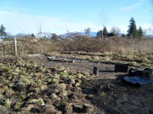 New project underway. Future goat pasture.